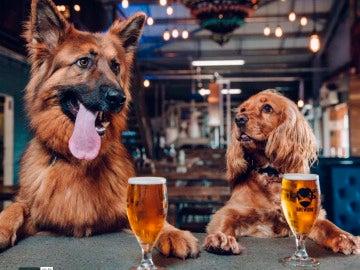 Dos perros en BrewDog