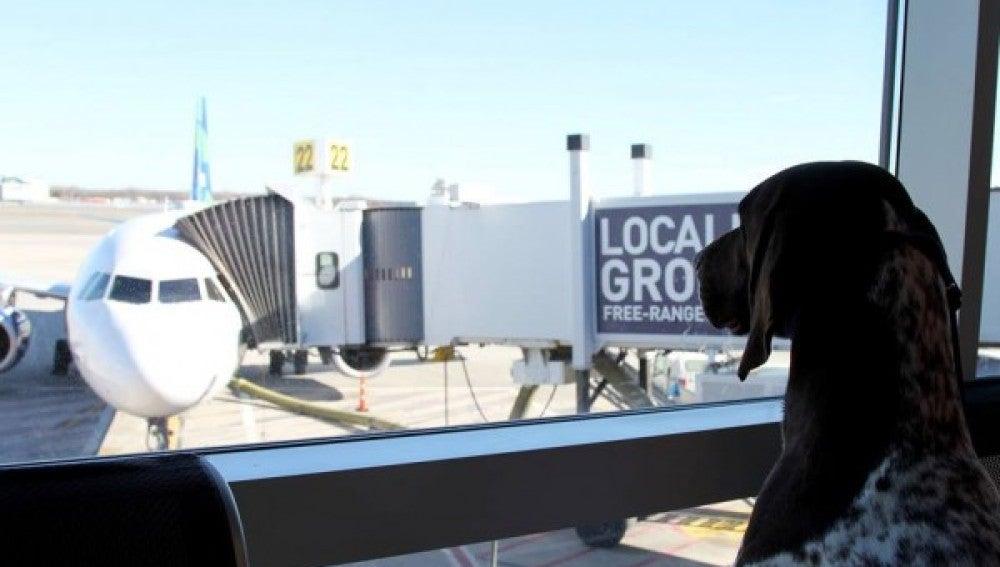 'El arca' del aeropuerto JFK
