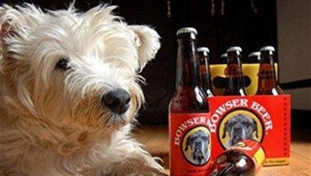 Mascota con una caja de cerveza para perros