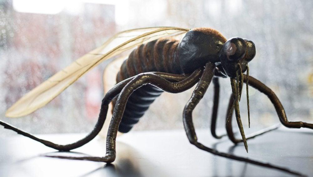 Reproducción de una especie de mosquito 'Culicidae'