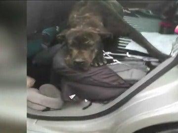 Foto de archivo de un perro víctima de malos tratos