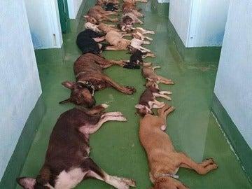 Día de sacrificio en una perrera