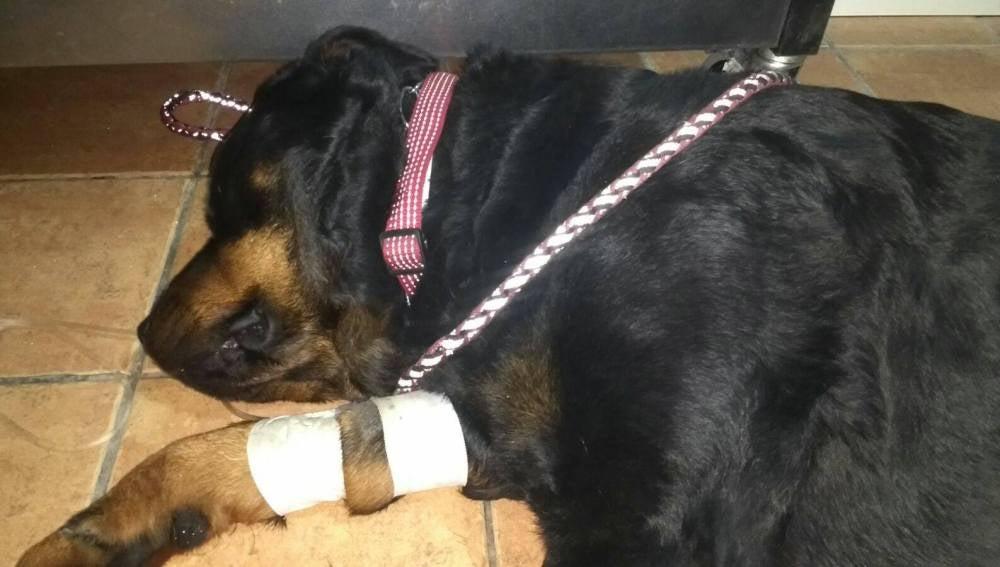 Perro envenenado en Alicante
