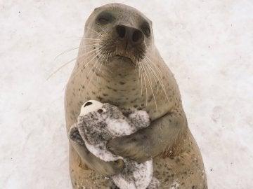 Una foca abraza a un peluche en un zoo de Japón
