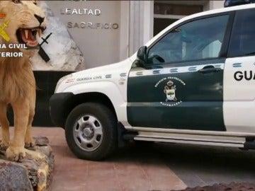 Frame 2.877034 de: Una operación contra el tráfico ilegal de especies se cierra con 59 detenidos