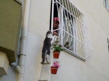 Şebnem Ilhan, la mujer que acoge a gatos callejeros en su casa para combatir el frío del invierno