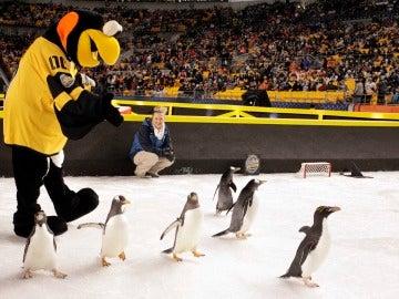 Los pingüinos, en el hielo antes del partido
