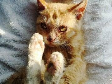 Nimo, un gato abandonado que se alimentaba de la suciedad de su cuerpo y que fue rescatado por Ek Park