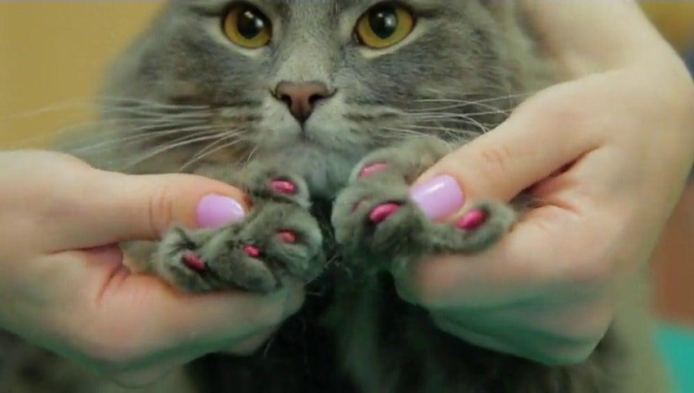 Frame 39.189333 de: Un spa-gimnasio ruso ofrece paquetes de tratamientos para perros y gatos