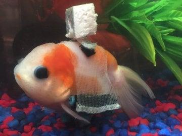 El pez en la silla de ruedas
