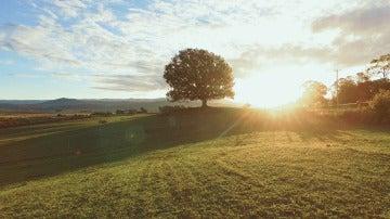 El árbol de tu vida