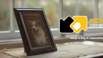 Campaña adopción de perros
