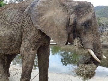 Ruperta, la elefante desnutrida
