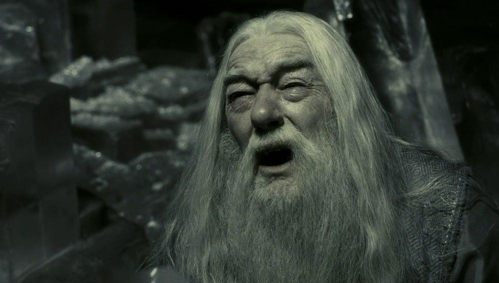 Dumbledore sufriendo porque no aciertas las preguntas