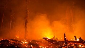 Deforestación causada por el aceite de palma