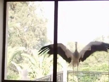 Frame 47.925334 de: Más de 500 millones de aves mueren al chocar contra cristales y ventanas