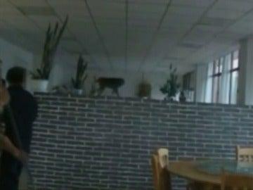 Frame 11.415407 de: La policía captura un mono salvaje dentro de un restaurante en China