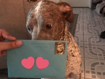 Apollo junto a una de las cartas que recibió de su dueño