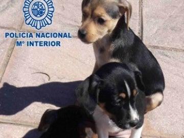 Los tres cachorros tras ser rescatados