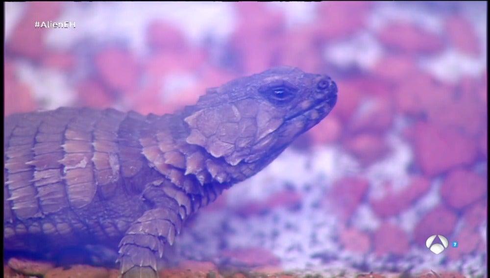 Frame 173.485714 de: Descubre algunos de los animales más raros del planeta Tierra
