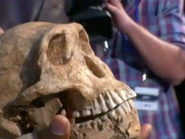 Frame 18.699829 de: Un fósil demuestra la convivencia entre el primer hombre y una especie de homínido