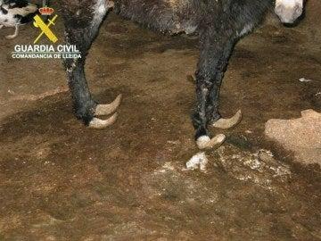 El burro en pésimas condiciones