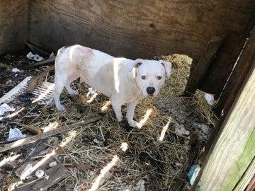 Treya, la perra que estuvo encadenada durante cinco años