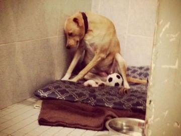 El perro más triste del mundo podría ser sacrificado