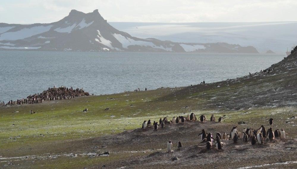 La vida vegetal de la Antártida crece debido al cambio climático
