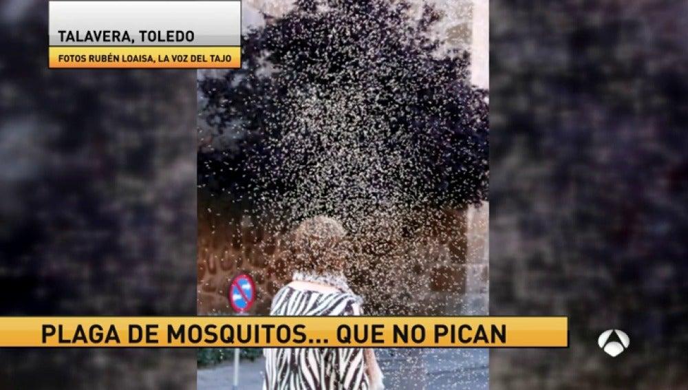 Frame 25.843924 de: mosquitos