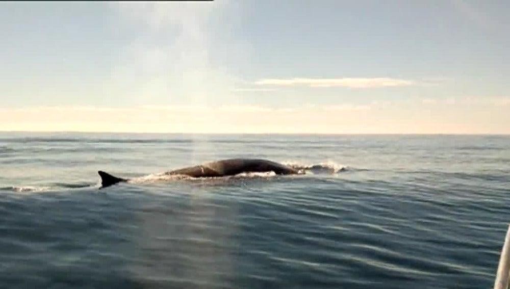 Ballenas vistas desde Torrevieja