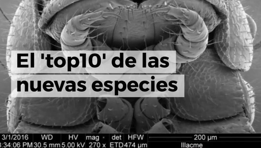 Frame 3.532911 de: Este es el 'top 10' de las nuevas especies del reino animal y vegetal, entre ellas un gusano churro o una planta que sangra