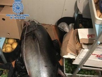 El atún rojo que se confundió con un cadáver