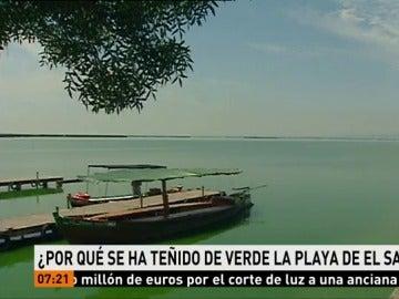 ¿Por qué se ha teñido de verde la playa de El Saler?