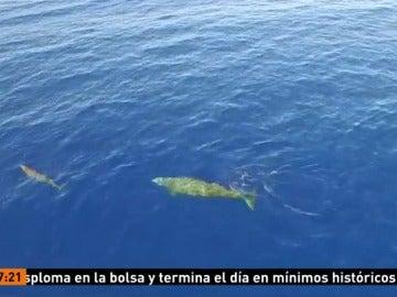 Ballenas en el océano