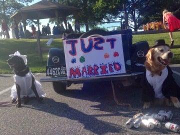 Molson recién casado