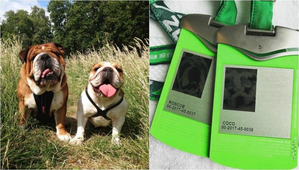 Los perros de Hamilton, con acreditación oficial de la Fórmula 1