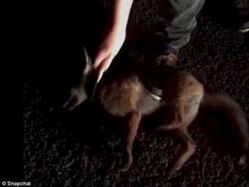 Universitarios de Reino Unido matan animales con motivo de una competición