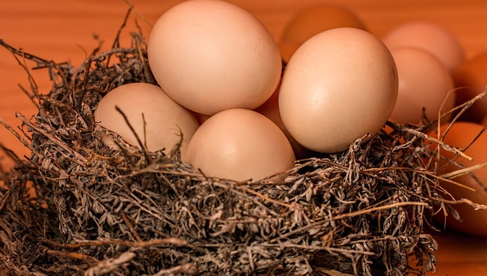Los huevos parecen ser una fuente viable y recomendada de nutrición