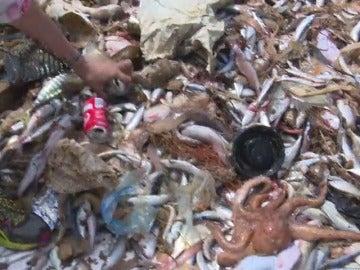 Frame 20.97829 de: Los pescadores recogen plásticos en el mar para reciclarlos