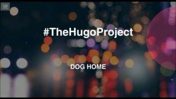 Dog Home, un espacio de acogida y cooperación para perros