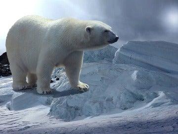 ¿Por qué disminuye el nivel del mercurio del organismo de los osos polares?