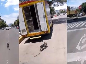 Persecución de un perro en México