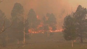 Un incendio forestal en Utah provoca la evacuación de los residentes de la zona