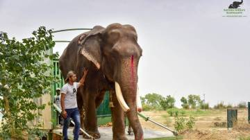 Gajraj es liberado tras 58 años de encierro y maltrato