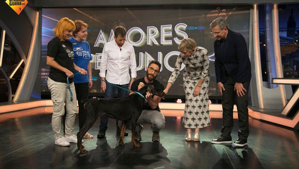 Adopta a Hans, el perro que fue utilizado como diana de tiro