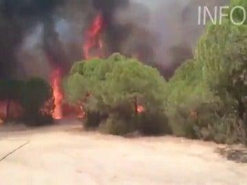 Incendio forestal en Riotinto que obliga a desalojar algunas viviendas
