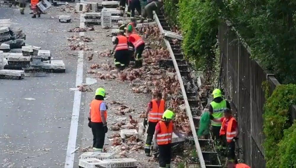 Miles de pollos bloquean una autopista en Austria