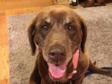 Mo, el perro que sobrevivió nueve meses perdido en una montaña