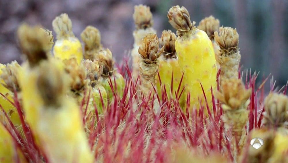 Antena 3 tv el mayor jard n de cactus de europa se encuentra en madrid re ne m s de 400 especies - Jardin de cactus madrid ...